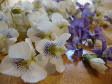 violets 110