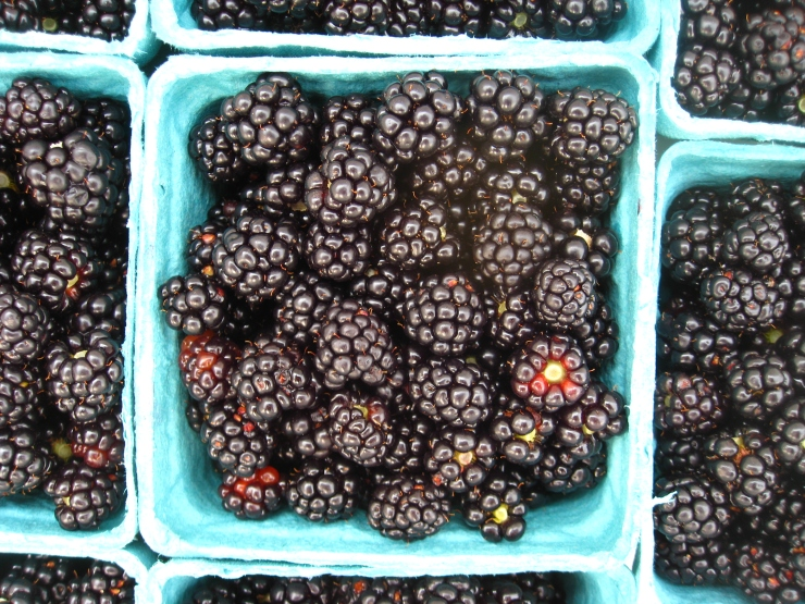 blackberries 2012 (22)